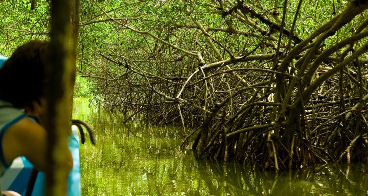 Una persona observa un manglar a Celestún, Mèxic. Foto: Ismael Alonso.