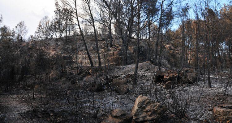 Incendi forestal a Tarragona. Foto: Josep Salvia i Boté.