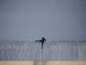 Una persona intenta saltar la tanca fronterera entre Espanya i el Marroc a Ceuta. Foto: Pedro Armeste / Save the Children.